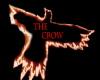The Crow DJ ANIMATO