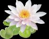 Flower (large)