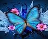 [SM] Frame Butterfly