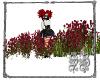 SB Wild Rose Field