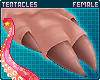 🌺 Pua'a | Hands F