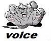 pack voice 2017
