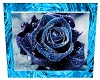 Ice Blue Rose Picture