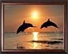 Cuadro Delfines