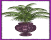 Purple Potted Plant