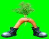[AR]Crazy Carrot
