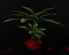 Unholy Plant
