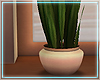 ○ Sunkissed Plant I