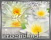 AM:: White Lotus Enh