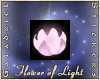 Flower of Light, Pink