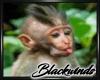 Monkey Bamboo Pic V. 6
