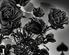 Cat~ Dark Roses Bush
