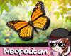 Orange Butterflies