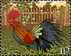 Real Rooster Animated