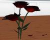 Vampire Animated Roses