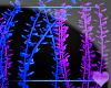 Aquatica ~Plants