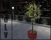 Anim. plant w lights V2