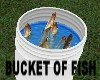 Fish Bucket *Whiting