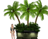 """""""A""""Potted Palm"""