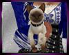 Dp Kitten Avi