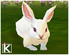 |K 🍃 Tea Time Bunny