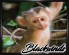 Monkey Bamboo Pic V.4