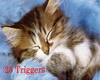 Cute Kitty Cat VB