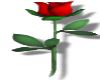 Small Red Rose