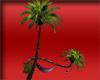 PURPLE Romance Palms