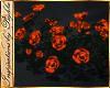 I~October Ground Roses