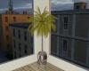 Char Palm Tree Plant