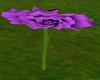 Purple Rose Table