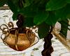 Arabic Money Tree
