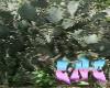C-N-C Garden 7 backgroun