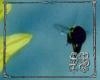 SB BumbleBee easel