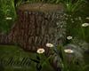 S= kiss trunk Botanical