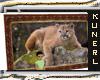 'K' Cougar Wall Rug