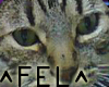 [FEL] Special someone