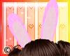 © Bunny Ears