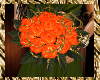 Orange Rose Wed~Bouquet