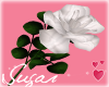 White Rose=Happy