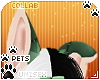 [Pets] Frankie | ears v2