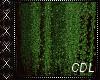 !C* O Ceiling Plant