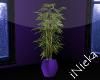Purple Office Plant