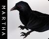 (Queen of Ravens) Raven