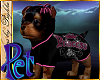 I~Yorkie*Princess*B Pet
