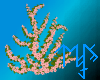 )L( Tearose ivy wall