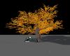 Autumn alone tree