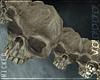 ¤ Skull Belt