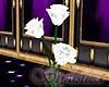 White Falling Rose